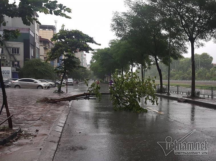 Hà Nội mưa tầm tã, gió phần phật, hàng chục cây xanh gãy đổ-15