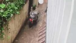 Clip: Tên trộm khổ sở dù lấy được chiếc xe phân khối lớn trong mưa bão