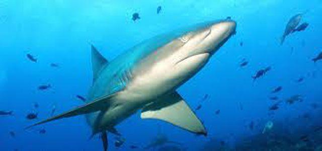 Giây phút sinh tử khách liều mình nhảy xuống biển có cá mập-3