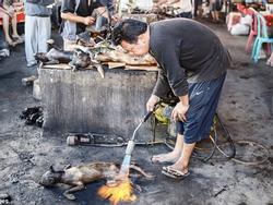 Những món ăn đáng sợ bán đầy ở chợ Indonesia khiến thực khách hết hồn