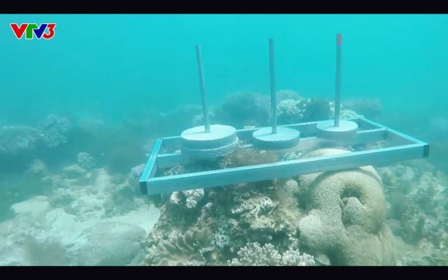 Cựu quán quân Cuộc đua kỳ thú Ngọc Anh tố êkip chương trình phá hoại môi trường biển khi quay hình-4