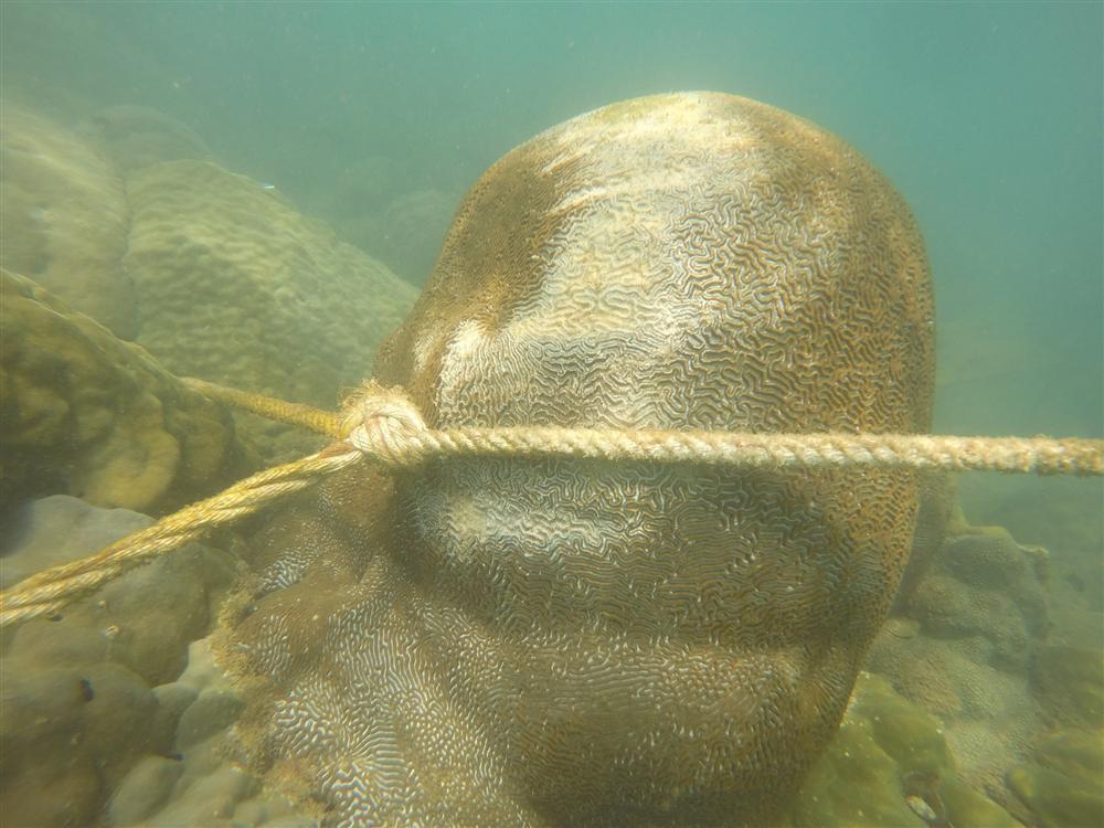 Cựu quán quân Cuộc đua kỳ thú Ngọc Anh tố êkip chương trình phá hoại môi trường biển khi quay hình-6