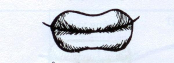 Phụ nữ sở hữu tướng miệng này, cả đời ắt vất vả truân chuyên, làm không đủ tiêu-1