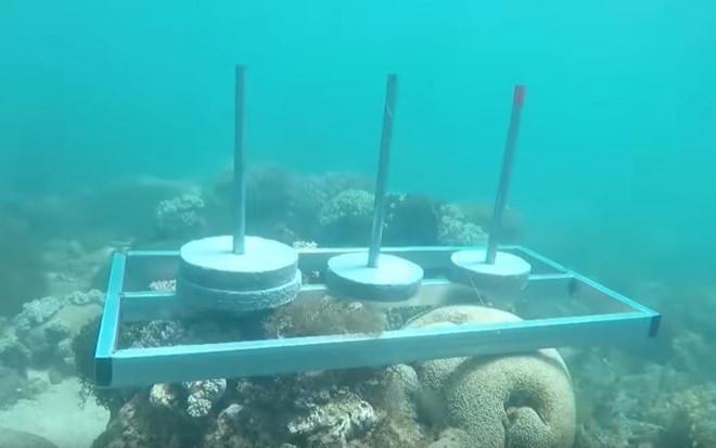 Ê-kíp Cuộc đua kỳ thú xin lỗi sau sự cố đặt bê tông lên rạn san hô-1