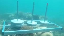 Ê-kíp 'Cuộc đua kỳ thú' xin lỗi sau sự cố đặt bê tông lên rạn san hô