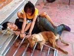 Triệu tập 30 nghi phạm trong đường dây trộm chó, tiêu thụ hơn 100 tấn-3