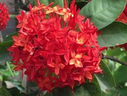 Những loại hoa may mắn và tài lộc nhất trong dịp lễ Vu Lan