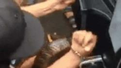 Clip: Con rắn vừa dài vừa to khổng lồ, quấn chặt trong xe máy, nhóm người đàn ông vật vã lôi ra