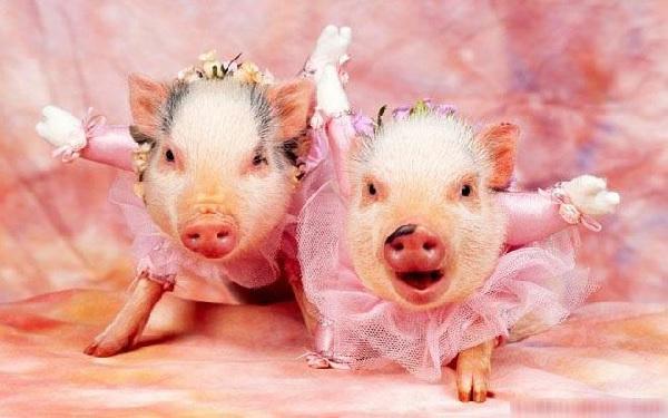 Top 4 con giáp kết hôn càng muộn càng hạnh phúc, kết hôn sớm dễ dẫn đến li hôn-1