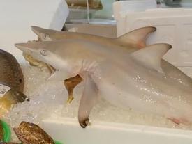 Ăn như một vị vua với 10 USD ở chợ hải sản Nhật Bản