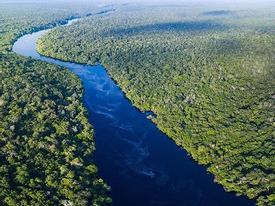 Khung cảnh kỳ vĩ của Amazon - rừng nhiệt đới lớn nhất Trái Đất