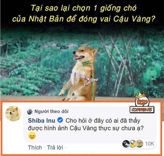 Ảnh chế tâm tư của cậu Vàng khi bị biến thành giống Shiba Inu-4
