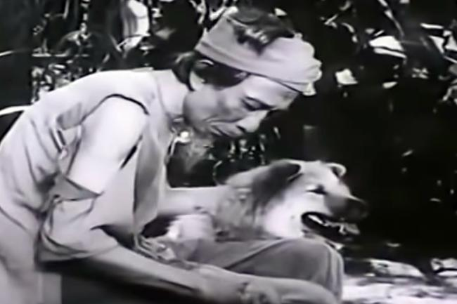 VZN News: 3 chú chó ta ấn tượng trên màn ảnh Việt, diễn xuất không kém cạnh chó ngoại-3