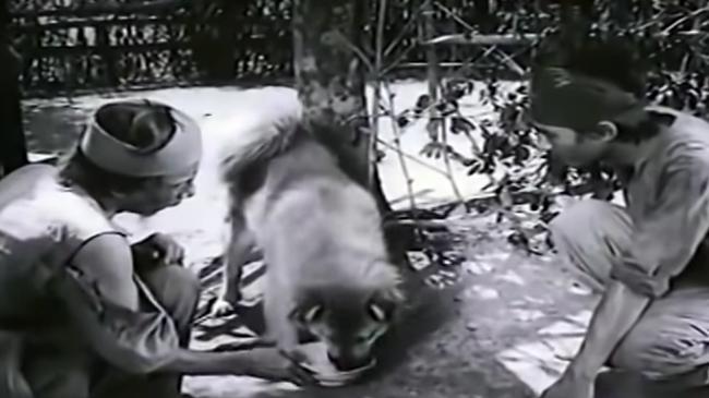 VZN News: 3 chú chó ta ấn tượng trên màn ảnh Việt, diễn xuất không kém cạnh chó ngoại-5