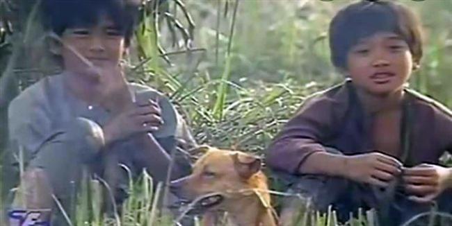 VZN News: 3 chú chó ta ấn tượng trên màn ảnh Việt, diễn xuất không kém cạnh chó ngoại-6