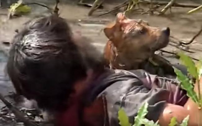 VZN News: 3 chú chó ta ấn tượng trên màn ảnh Việt, diễn xuất không kém cạnh chó ngoại-8
