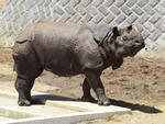 Ấn Độ tiêu hủy hàng nghìn sừng tê giác-1