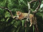 Vì sao con người cần bảo vệ rừng Amazon?