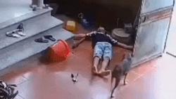 Clip: Thấy chủ say thuốc lào ngã lăn quay ra đất, chú chó hốt hoảng chạy đi tìm người đến cứu giúp