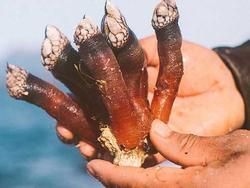 Món ăn đặc sản 'ngón tay của quỷ' khiến nhiều người khiếp sợ