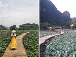 Xuất hiện đầm sen đẹp lạ lùng ở Ninh Bình làm giới trẻ mê mẩn muốn đến 'check in'