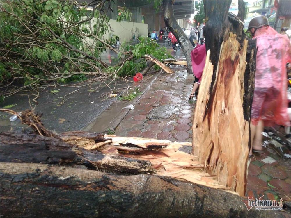 Giông lốc đánh úp, cây đổ la liệt giữa phố Hà Nội, một thanh niên tử vong-5