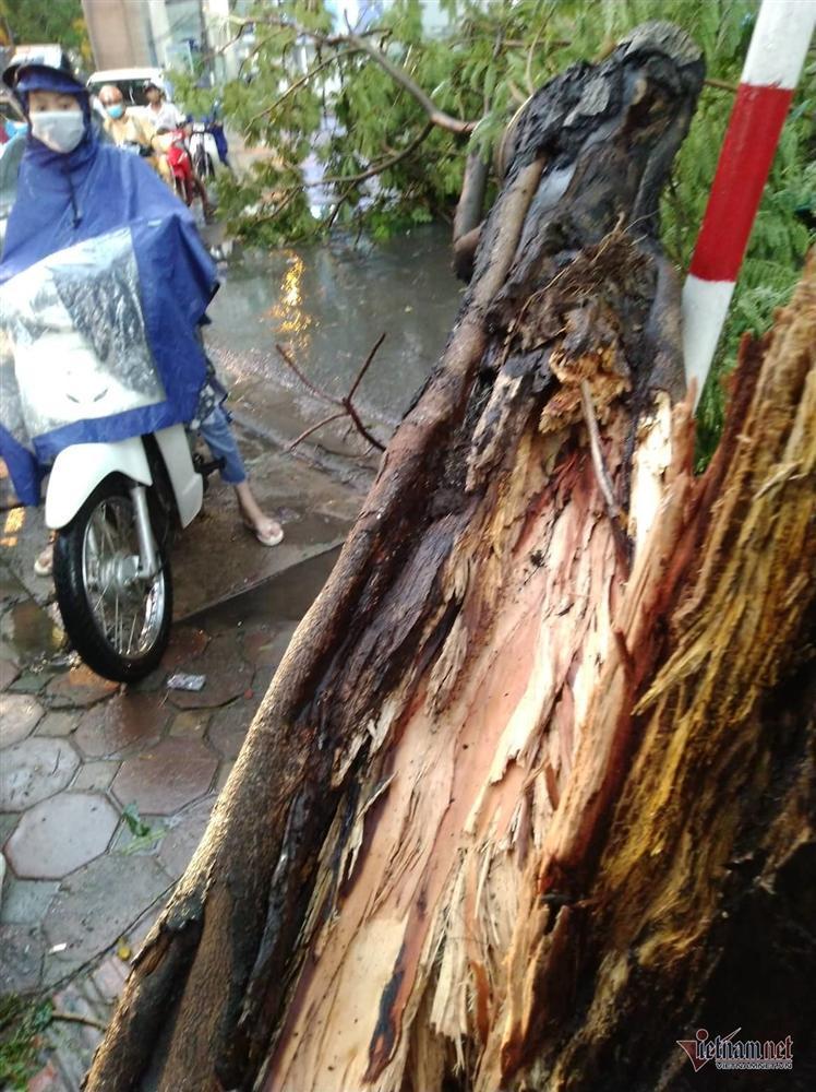 Giông lốc đánh úp, cây đổ la liệt giữa phố Hà Nội, một thanh niên tử vong-6