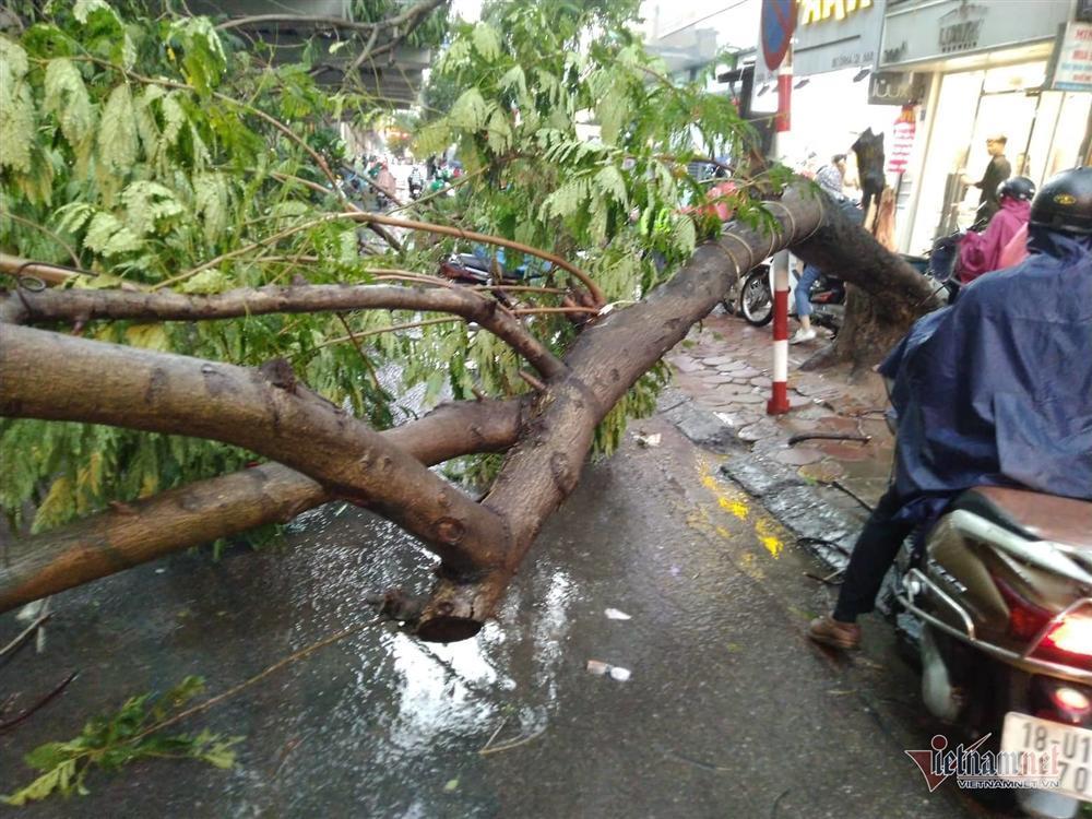 Giông lốc đánh úp, cây đổ la liệt giữa phố Hà Nội, một thanh niên tử vong-7