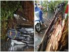 Giông lốc 'đánh úp', cây đổ la liệt giữa phố Hà Nội, một thanh niên tử vong