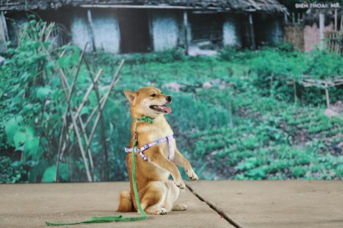 Phim Cậu Vàng: Không có chuyện bắt chó ta đóng thế cảnh bị đánh đập cho chó Nhật?-1
