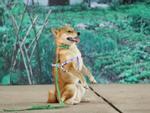 Phim 'Cậu Vàng': Không có chuyện bắt chó ta đóng thế cảnh bị đánh đập cho chó Nhật?