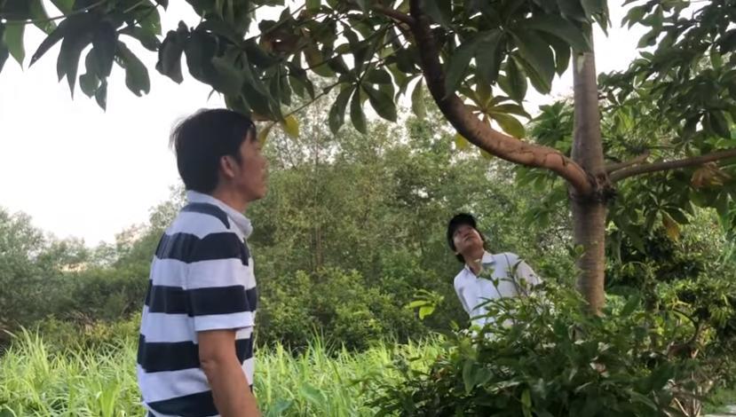 VZN News: Hoài Linh lần đầu bật mí cuộc sống trồng cây hái trái mộc mạc như nông dân thứ thiệt-1