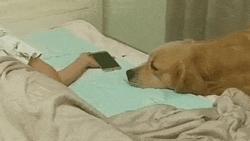 Clip: Chủ xem điện thoại xong ngủ thiếp đi, chú chó trung thành có hành động làm bất cứ ai cũng 'tan chảy'