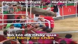 Kinh hoàng bò tót trong lễ hội bất ngờ 'nổi điên', nhảy qua hàng rào chắn, húc 19 người bị thương