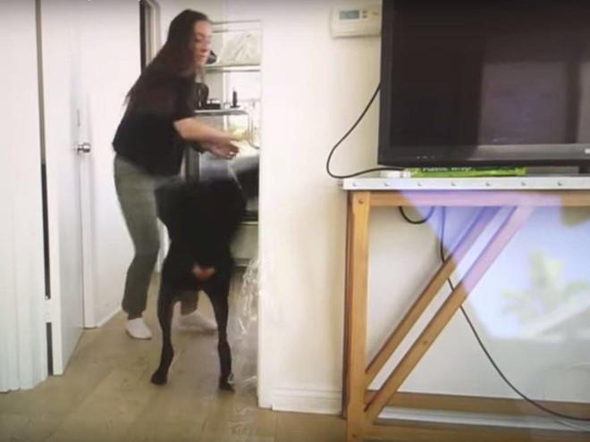 Đăng nhầm video ngược đãi thú cưng, YouTuber bị cảnh sát hỏi thăm-1