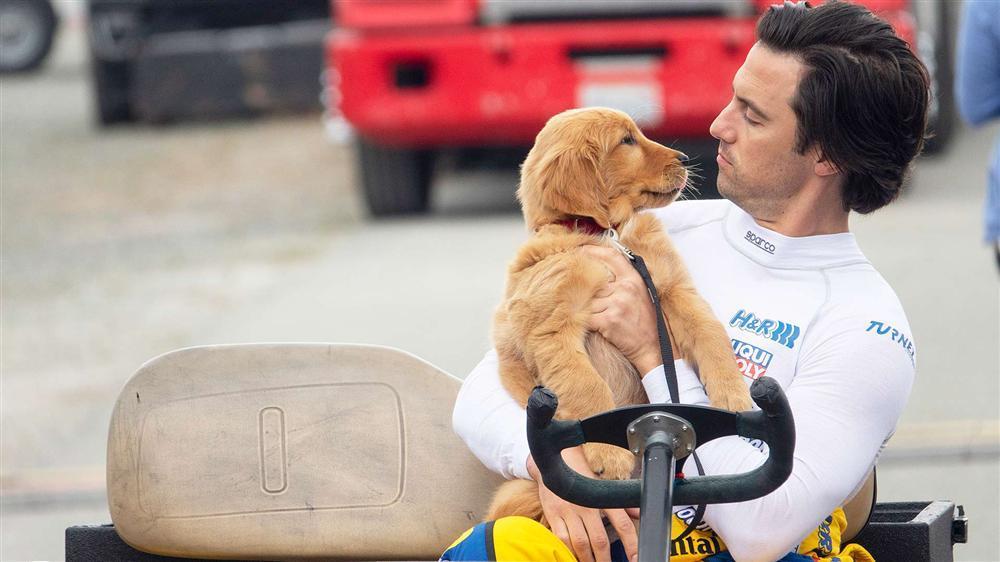 VZN News: Những phim cảm động về con người và thú cưng-5
