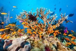 Rạn san hô khổng lồ được ghép bởi hơn 900 hòn đảo