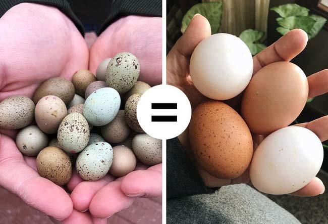 11 quan niệm sai lầm khi ăn trứng gà ai cũng mắc phải-2