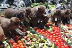 Hòn đảo bị khỉ xâm chiếm ở Việt Nam lên báo nước ngoài