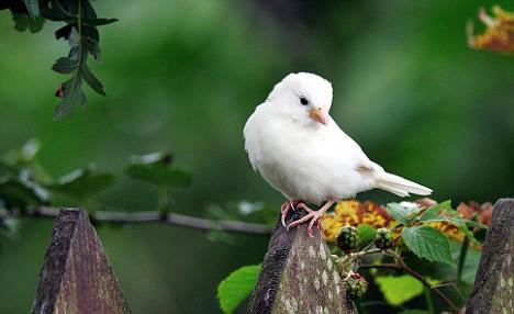 Xem tuổi và tháng sinh âm lịch để biết mang mệnh chim gì?-3