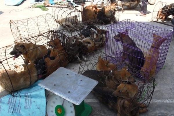 VZN News: Chiếc hầm bí mật trong đường dây trộm hơn 100 tấn chó ở Thanh Hóa-1