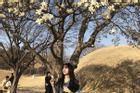 Check-in 3 địa điểm đẹp như phim trong mùa thu Hàn Quốc