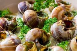 Món ốc sên trên bàn tiệc 5 sao của người Pháp có gì đặc biệt?