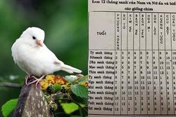 Xem tuổi và tháng sinh âm lịch để biết mang mệnh chim gì?