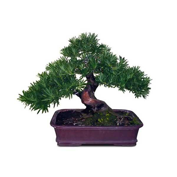 Người mệnh Thủy hợp cây gì, đặt cây gì để tiền vào đầy túi?-6