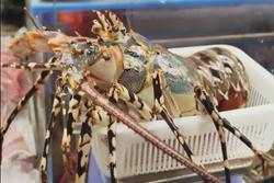 Chế biến sashimi từ tôm hùm xanh cỡ lớn giá 700 USD