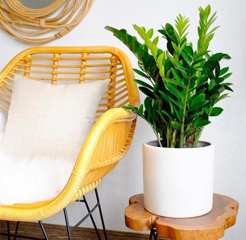 Muốn ngồi trong nhà cũng may mắn, hãy trồng ngay 5 cây này-1