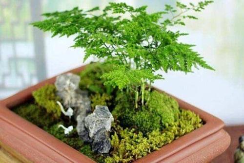 Muốn ngồi trong nhà cũng may mắn, hãy trồng ngay 5 cây này-2