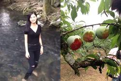 Ăn mận trên cây, luộc trứng rùa quý hiếm rồi lên mạng khoe