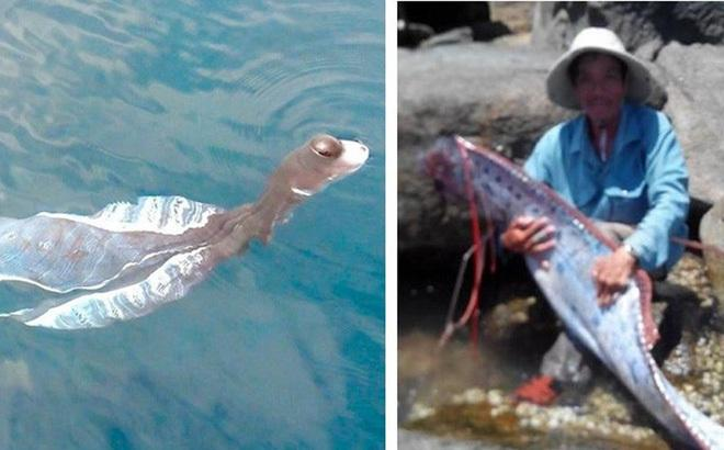 Loài thủy quái xuất hiện ở Việt Nam khiến người dân khiếp sợ-1